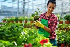 Black woman working in a botanical garden. African american working in a botanical garden stock photo