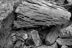 Black wood coal Stock Image