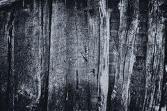 Black wood texture Stock Photos