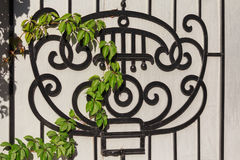 Black wrought-iron grille and ivy branch Royalty Free Stock Photography