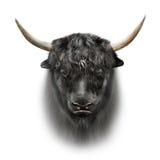 Black yak face isolated on white background Royalty Free Stock Photos