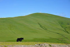 Black yak standing in front of the mountain Stock Photo