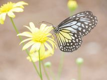 Yellow. Black and yellow Royalty Free Stock Image