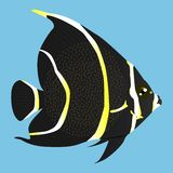 Black and yellow angelfish vector icon on a blue background. Ocean fish illustration isolated on blue. Exotic fish realistic style. Design, designed for web and stock illustration