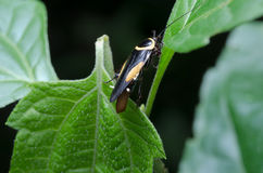 A black and yellow bug in the forest Stock Photography