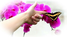 Black and yellow butterfly. Anonymous hand trying tro touch a nice black and yellow butterfly stock video