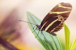 Black Yellow Butterfly on Green Leaf Plant during Daytime Royalty Free Stock Images