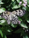 Black and yellow butterfly. Butterfly perched on a plant stock photo