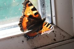 Black and yellow butterfly sitting on window glass royalty free stock photo