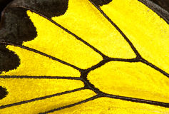 Black and yellow butterfly wing Royalty Free Stock Photos