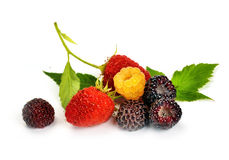 Black yellow and red raspberries Stock Images