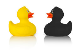 Black and yellow rubber ducks Royalty Free Stock Image