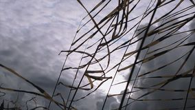 Black and yellow tapes sway on wind in summer day. Festival. Grey cloudness sky before heavy rain stock video