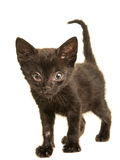 Black young cat with sneezing disease. Black young sick cat kitten with sneezing disease, dirty nose and eyes isolated on a white background Royalty Free Stock Photos