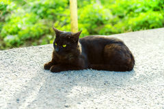 Black young cat warming up at the road in the afternoon. royalty free stock images
