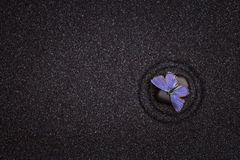 Black zen garden with wave lines  with a blue butterfly Stock Photo