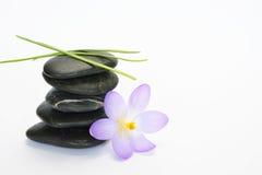 Black zen stones with bamboo en crocus on empty white background. Black cairn zen stones with purple spring saffron crocus and bamboo twig on white empty copy Stock Photos
