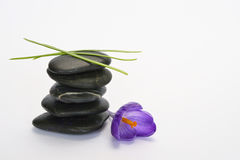Black zen stones with bamboo en crocus on empty white background. Black cairn zen stones with purple spring saffron crocus and bamboo twig on white empty copy Royalty Free Stock Image