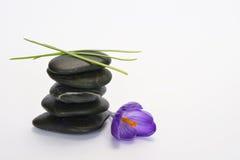 Black zen stones with bamboo en crocus on empty white background Royalty Free Stock Image