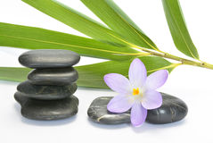 Black zen stones with bamboo en crocus on empty white background Royalty Free Stock Photos