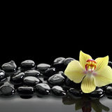 Black Zen stones and orchid Royalty Free Stock Photography
