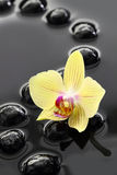 Black Zen stones and orchid Stock Photo