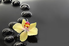 Black Zen stones and orchid Stock Image