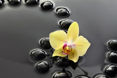 Black Zen stones and orchid flower Stock Photography