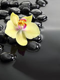 Black Zen stones and orchid flower Royalty Free Stock Image