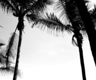 Blackandwhite. Island paradise costarica palmtree black blackandwhite stock photography