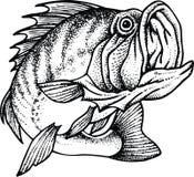 Blackback fish Stock Images