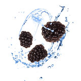 Blackberies with water splash Stock Images