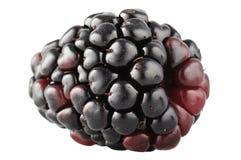 Blackberrie Stock Images