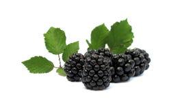 blackberries Στοκ εικόνα με δικαίωμα ελεύθερης χρήσης