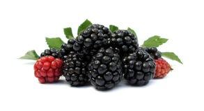 blackberries Στοκ Φωτογραφίες
