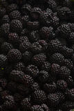Blackberries Stock Photos