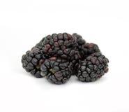 Blackberries Stock Images