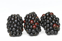 Blackberries. Three blackberries in a row Stock Photography
