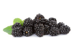 Free Blackberries Royalty Free Stock Photography - 19923437