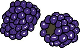 Blackberries. Two blackberries isolated on white drawn in toddler art style Stock Photos