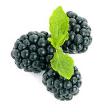 Blackberries. Picture of three blackberries on white Stock Images