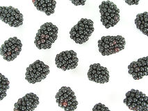 Blackberries royalty free stock photography
