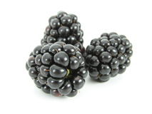 Blackberries. Isolated Stock Photos