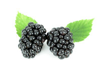 Blackberries. Two Blackberries - isolated Stock Images