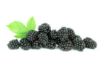 Blackberries. Isolated Stock Photography