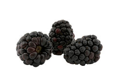 Blackberries. Three blackberries isolated on white background Stock Images