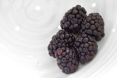 Blackberries. Or black raspberries in white ceramic colander Stock Photos