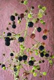Blackberries against grungy wall Stock Photography