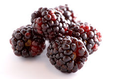 Blackberries against white. A few blackberries over a white background Royalty Free Stock Images