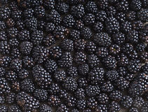 Blackberries background. Royalty Free Stock Photography